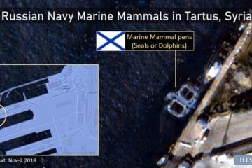 Russian Navy Has Deployed Marine Mammals In Syrian Civil War