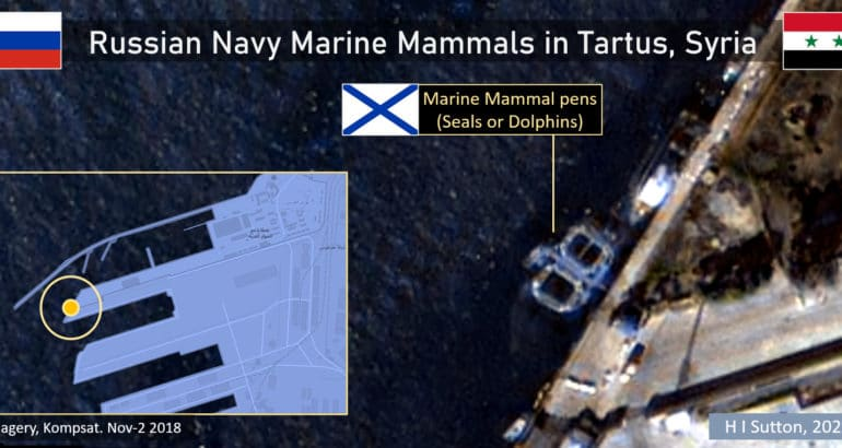 Russian Navy Has Deployed Marine Mammals In Syrian Civil War